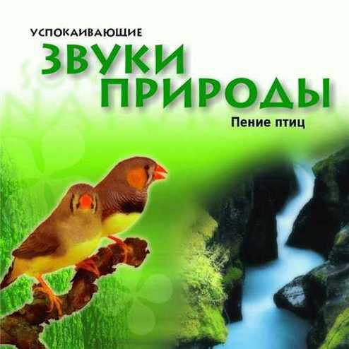 Звуки Природы И Пение Птиц